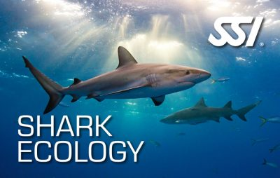 Shark Explorers Dive Training