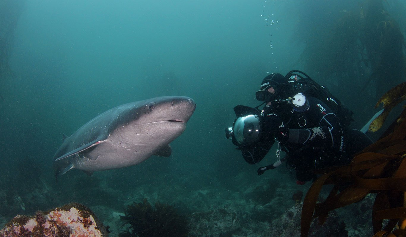 Inshore Dive Trips - Shark Explorers