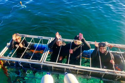 Seven Gill Shark Diving in False Bay