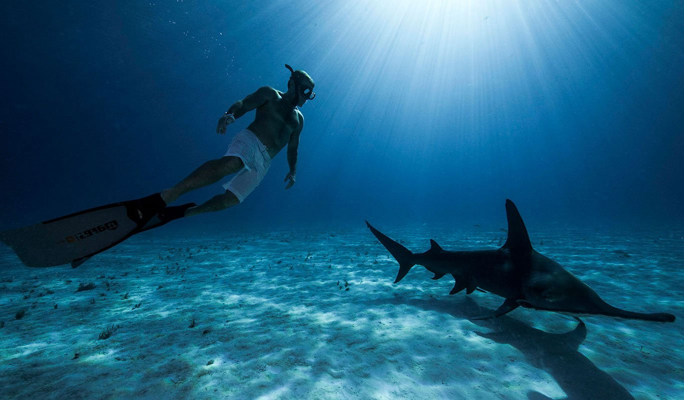 Hammerhead Shark Diving in the Bahamas