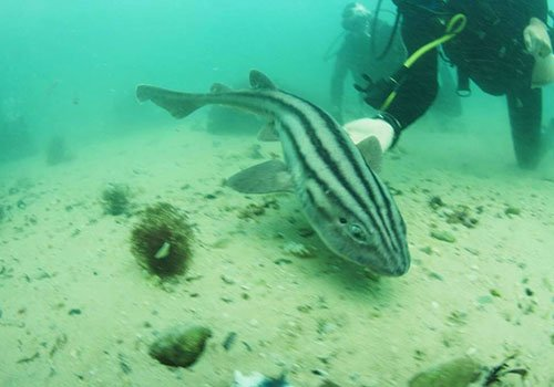 Shark Explorers Internship